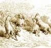 Пёстрые овцы