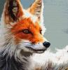 Шесть лисиц