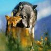 Волчий приёмыш