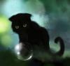 Сказка про котёнка Уголька